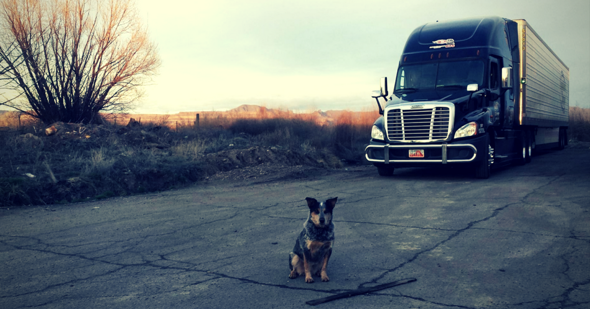 truck-driver-pet-policy-3